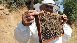 Terörden arındırılan yaylalarda arıcıların 'tatlı' mesaisi