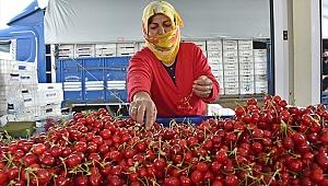 Üreticiler artan meyve talebine yetişemiyor