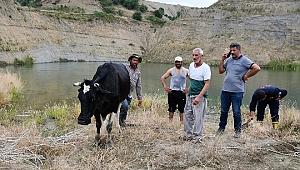 Gölet kıyısında mahsur kalan hamile inek kurtarıldı