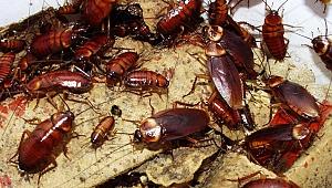 İstanbul Hamam Böceği İlaçlama Fiyatları