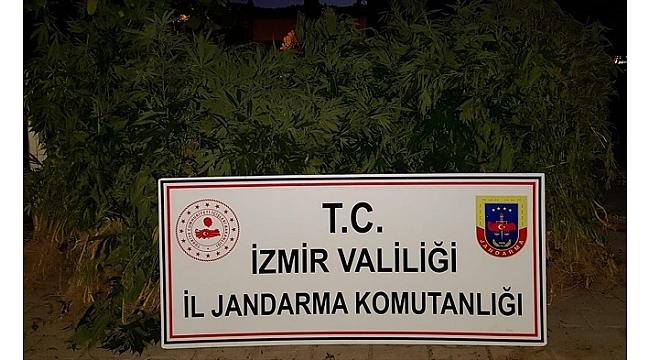 İzmir'de hint keneveri operasyonu