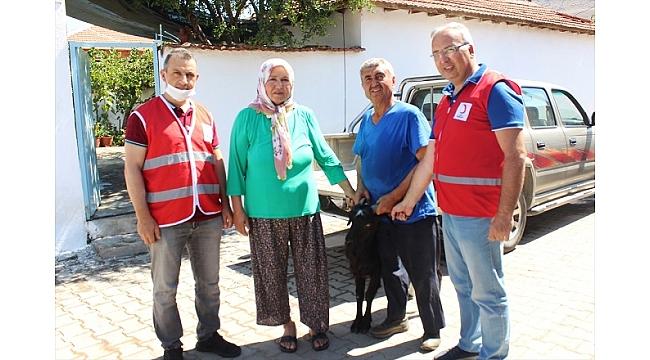 Kurbanlık keçisini Türk Kızılaya bağışladı