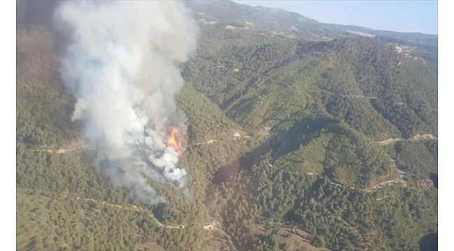 Manisa'da orman yangını çıktı