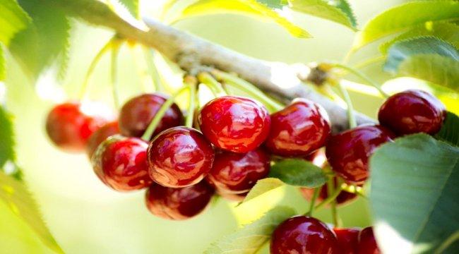 Taze meyve sebze ihracatçılarından rekor geldi