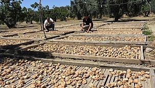 Aydın'da kuru incir tezgahlarda yerini almaya başladı