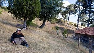 Firdevs ninenin gözyaşı döktüğü yanmış ağaçların yerinde fidanlar yeşeriyor