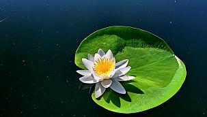 Işıklı Gölü doğal güzellikleriyle cezbediyor