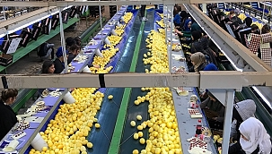 Limon ihracatında ön izin şartının kaldırılmasından memnunlar
