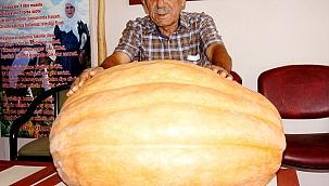 Sarıgöl'de 80 kiloluk bal kabağı yetiştirildi