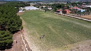Susuz yetişen 'kınalı bamya' fiyatıyla üreticisini sevindirdi - İZMİR
