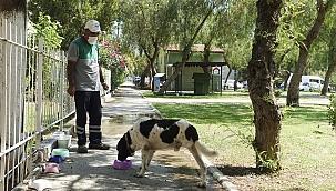 Üç bacaklı sokak köpeği, temizlik işçisinin dostluğu