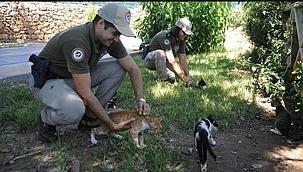 """""""Çevre, Doğa ve Hayvanları Koruma Büro Amirliği"""" kuruldu"""