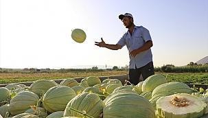 Kırkağaç'taki kavun üreticileri, dış pazara açılmak istiyor