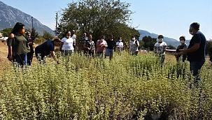 Yetiştirdikleri tıbbi aromatik bitkiler kadınlara kazanç oldu