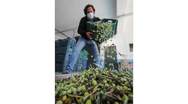 Devlet desteğiyle kurulan tesisten Avrupa'ya zeytinyağı ihracatı