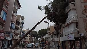 Salihli'de çam ağacı, apartmanın üzerine devrildi