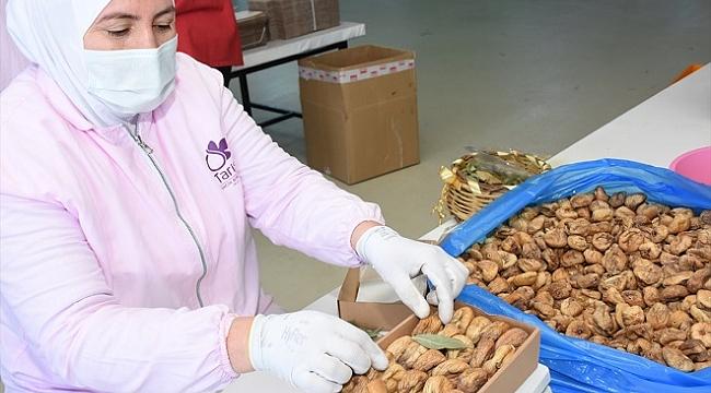 Kuru incir üreticileri 2021'den umutlu