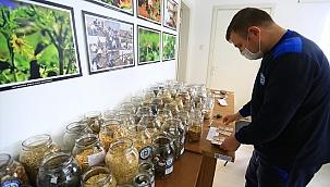 Muğla'da üretilen yerel tohumlar toprakla buluşuyor