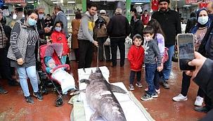 Denizli'de 2,5 metrelik kılıç balığı ilgi çekti