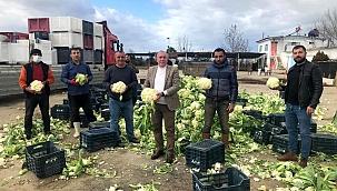 Korona virüs çiftçileri durduramadı