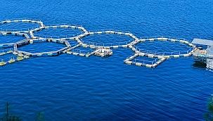 BM 2022 yılını Balıkçılık ve Su Ürünleri Yılı ilan etti