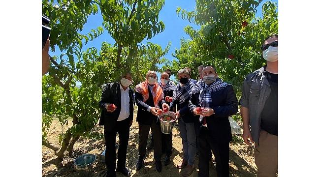 İzmir Valisi Köşger, Selçuk'ta şeftali hasadına katıldı