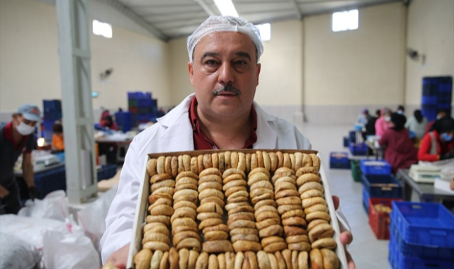 Kuru incir fiyatları üreticiyi memnun etti