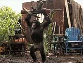 Maymunun Eline Silah Verilirse